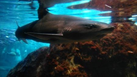 サメ.jpg