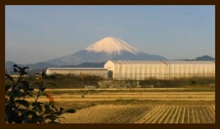 富士山 伊勢原にて 20170106 掲載用.jpg