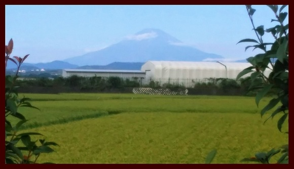 富士山 伊勢原にて 20170901掲載用.jpg