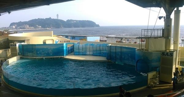 新江の島水族館へ行ってきました.jpg